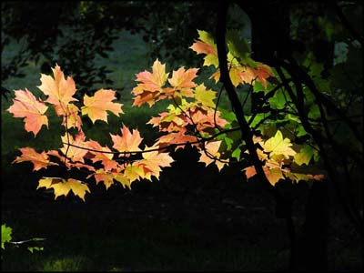 Glowing leaves